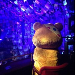Pudsey's engrossed in the show